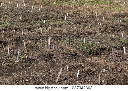 Plowed Vegetable Garden Beds Prepared For Planting Seedlings Of Vegetables Or Flowers With Neat Inte
