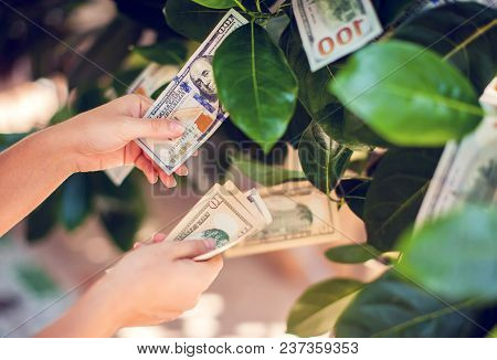 Money Tree With Dollar Bills Growing On Leaves. Hand Collect Money From Money Tree
