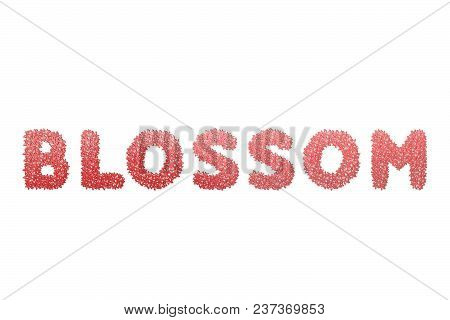 Blossom Text For Title Or Headline In 3d Style With Stroke Flower Petals