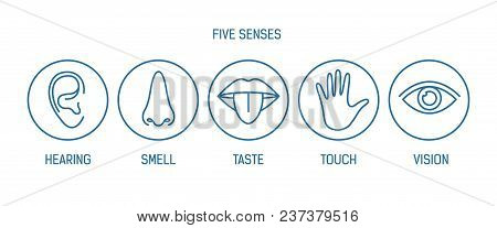Collection Of 5 Senses - Hearing, Smell, Taste, Touch, Vision. Bundle Of Human Sensory Organs Drawn