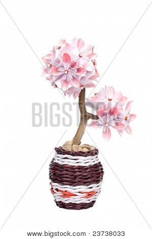 Fantastic flower in a pot