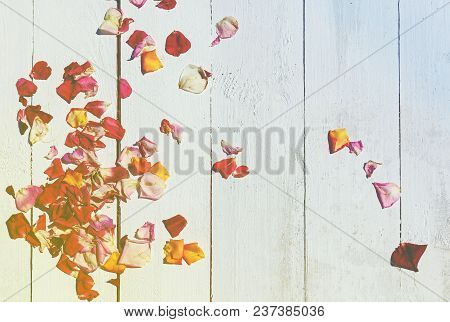 Red Rose Petals On A White Wooden Background. Rose Petals On A Wooden Background