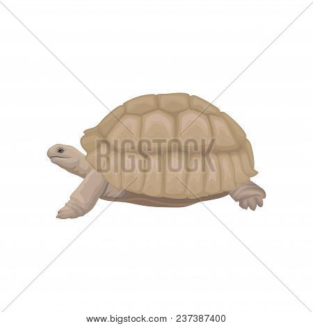 Sea Turtle Wild Animal Vector Illustration Isolated On A White Background.