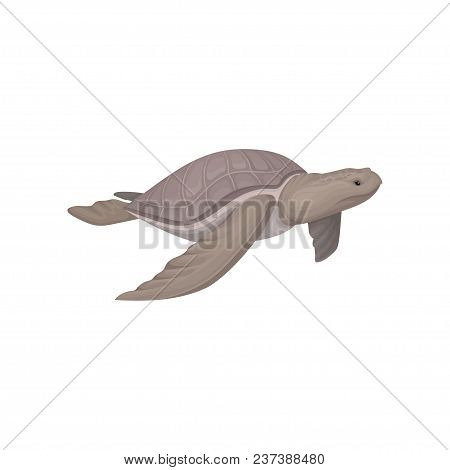 Sea Turtle Animal Vector Illustration Isolated On A White Background.