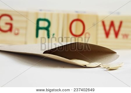 Open Packet Of Zucchini Seeds With Some Scattered In Front Of Envelope With Generic Wooden Blocks In