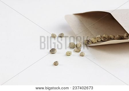 Open Packet Of Spinach Seeds With Some Scattered In Front Of Envelope.  Extreme Shallow Depth Of Fie