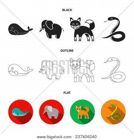 Whale, Elephant, Snake, Fox.animal Set Collection Icons In Black, Flat, Outline Style Vector Symbol