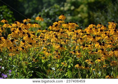 Summer Meadows In Central Europe Are Still Full Of Flowers. Flowers Are Nice.their Colors Meet Human