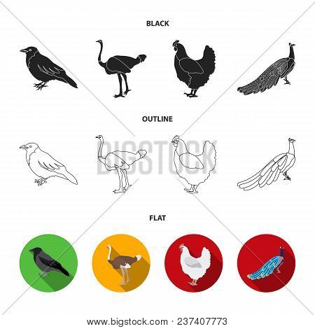 Crow, Ostrich, Chicken, Peacock. Birds Set Collection Icons In Black, Flat, Outline Style Vector Sym