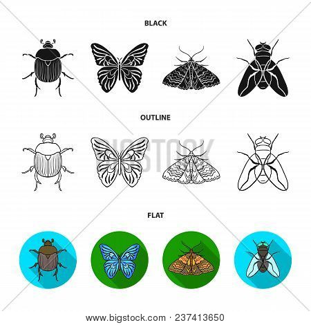Wrecker, Parasite, Nature, Butterfly .insects Set Collection Icons In Black, Flat, Outline Style Vec