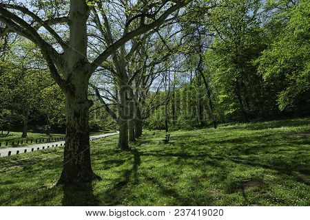 Trees In The Park. Trees And Shades Under Sunlight In The Park. Relaxing In The City Park On The Aft