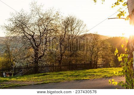 Forest Landscape - Forest Trees With Grass On The Foreground And Sunset Light Shining Through The Fo