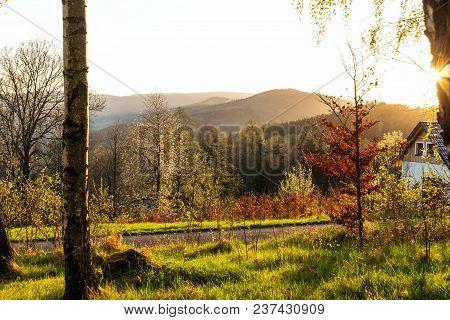 Autumn Park Background. Autumn Picturesque Tree In Sunny Autumn Park Lit By Sunlight -autumn Tree In