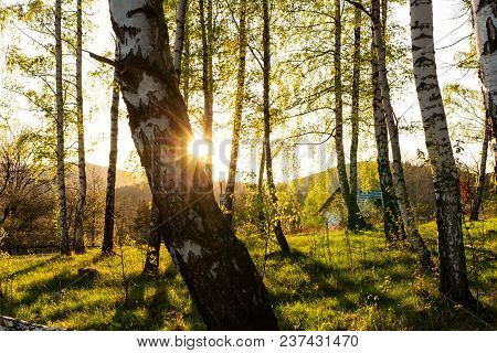 Autumn Forest Background. Forest Autumn Nature. Forest Autumn Sunny Landscape - Forest Autumn Yellow