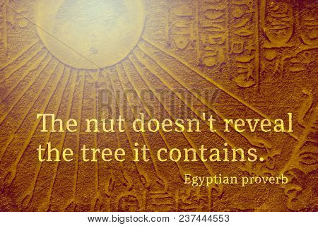 The Nut Does Not Reveal The Tree It Contains - Ancient Egyptian Proverb Citation