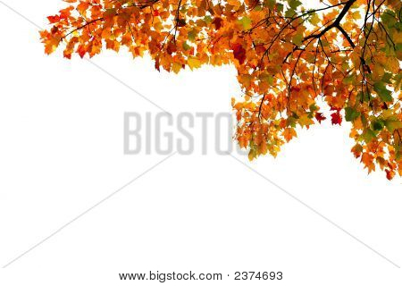 Vividly Colored Autumn Leaves In Corner Of Frame