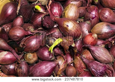 Background - Bulbs Of Red Onion, Intended For Planting In The Soil, Closeup