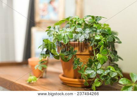 Cozy Houseplant On The Windowsill With A Blurred Background In A Vintage Terracotta Pot