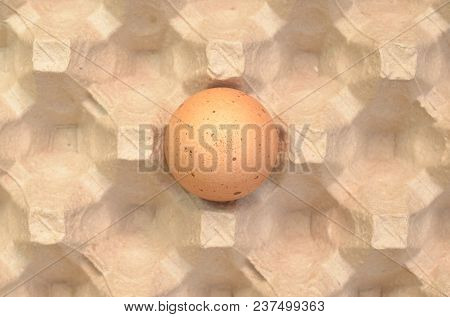 One Brown Egg In The Egg Tray
