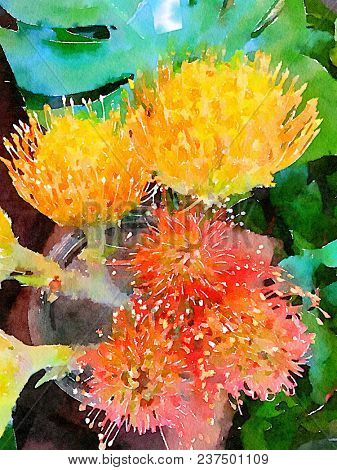 Very Nice Dramatic Watercolor painting Of a protea Pin Cushion Plant On paper