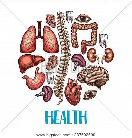 Health Poster Of Human Body Organs. Vector Color Sketch Design Of Heart, Brain Or Lungs And Kidney O