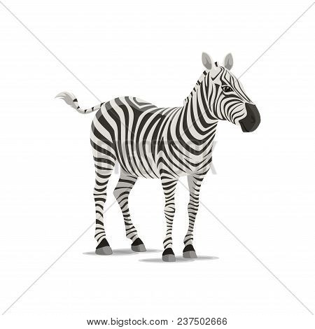 Zebra animal icon. Vector isolated zoology flat design of zebra horse or equid species of African savanna for wildlife fauna and and nature zoo or sport team badge poster
