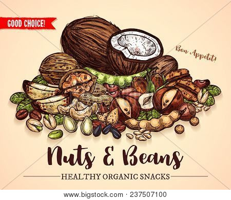 Nuts, Beans And Fruit Seeds Mix Sketch Poster. Vector Design Of Peanut Or Coconut Nut And Hazelnut,