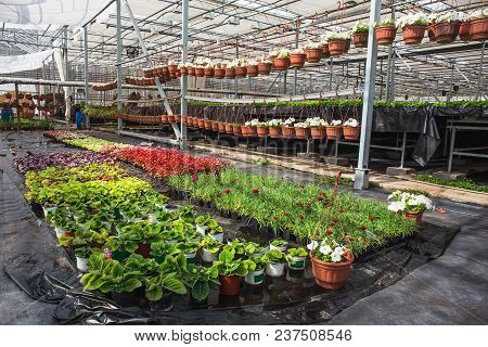 Modern Large Greenhouse Or Hothouse, Cultivation And Growth Seeds Of Ornamental Plants, Flower Nurse