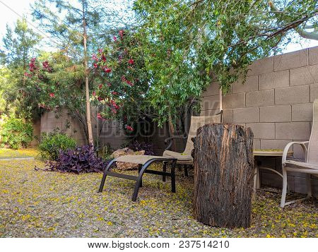 Colorful Game Of Spring Wind Spreading Yellow Flowers Of Palo Verde Tree All Over Desert Style Backy