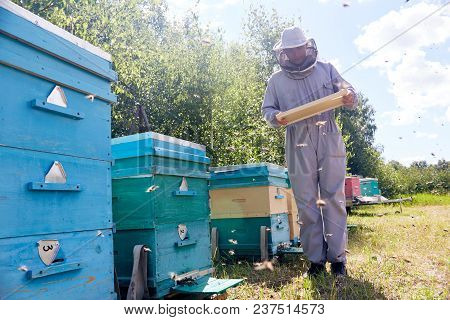 Full Length Portrait Of Modern Young Beekeeper Collecting Honey From Hive, Checking Hive Frames With