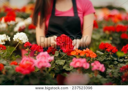 Greenhouse Florist Worker Hands Caring For Plants