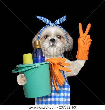 Shitzu Dog In Apron Doing Household Chores. Isolated On Black Background