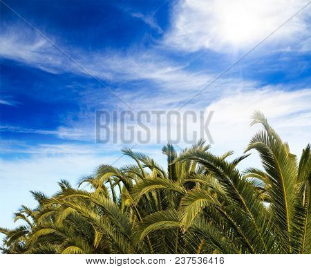 Palm trees tops under cloudy blue sky background. Tropical plants at exotic destinations.