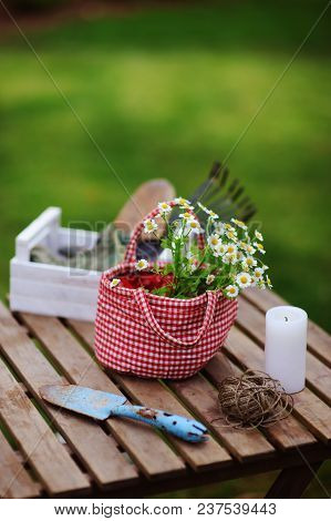 Garden Work Still Life In Summer. Chamomile Flowers In Red Handmade Bag, Gloves And Toold On Wooden