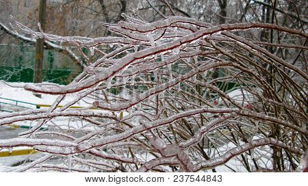 Closeup View To Branches Of Tree After Freezing Rain At Moscow, Russia