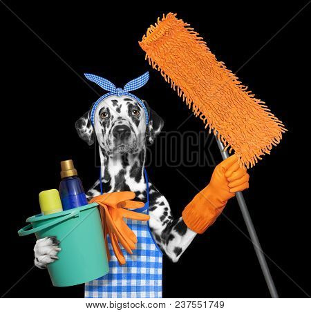 Dalmatian Dog In Apron With Mop Doing Household Chores. Isolated On Black Background
