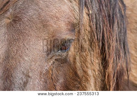 Close-up Photo Of A Konik Wild Horses Eye