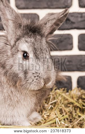 Portrait Of A Fluffy Gray Rabbit Sitting On A Hay Near A Brick Wall, Close-up