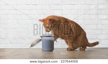Ginger Cat Caught While Stealing Food From A Open Food Dish.