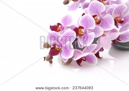 Set of many gray stones with branch pink orchid