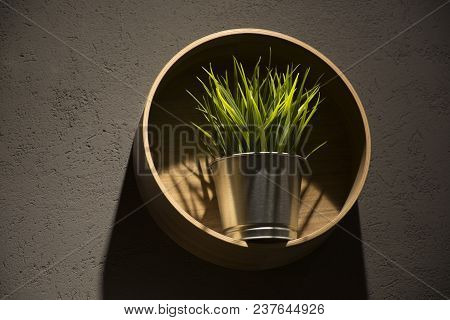 Pot With Green Grass In A Modern Style On A Gray Wall With A Round Wooden Shelf