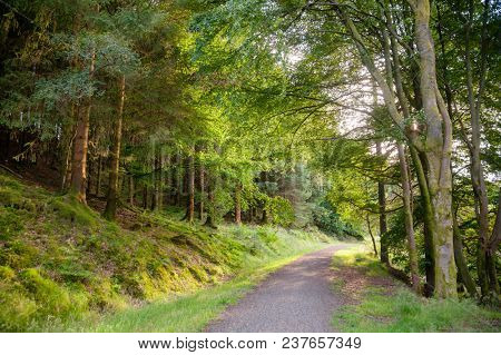 Scenic brideway or footpath through sunlit summer forest in Scotland UK
