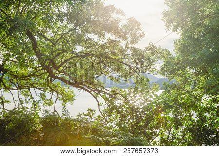 Summer landscape with Loch Venachar seen through sunlit greenery in Stirling district of Scotland UK