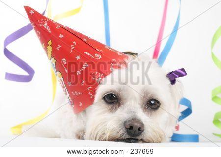 Party Pooch