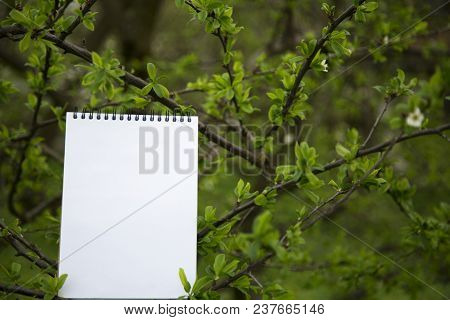The Notepad Stands On A Branch. Closeup. Copy Space.