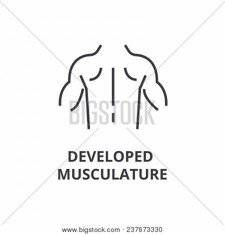 Developed Musculature Thin Line Icon, Sign, Symbol, Illustation, Linear Concept Vector