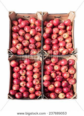 Red Organic Apples In Four Cardboard Boxes Isolated On A White Background, Harvest And Farmer's Mark