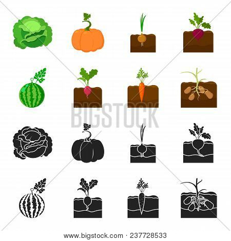 Watermelon, Radish, Carrots, Potatoes. Plant Set Collection Icons In Black, Cartoon Style Vector Sym