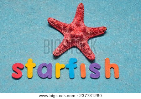 A Red Starfish With The Word Star On A Blue Background
