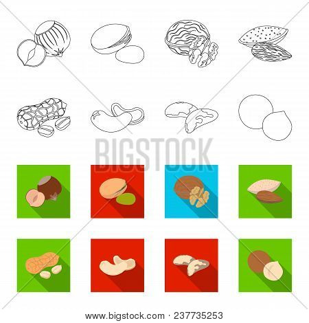 Peanuts, Cashews, Brazil Nuts, Macadamia.different Kinds Of Nuts Set Collection Icons In Outline, Fl